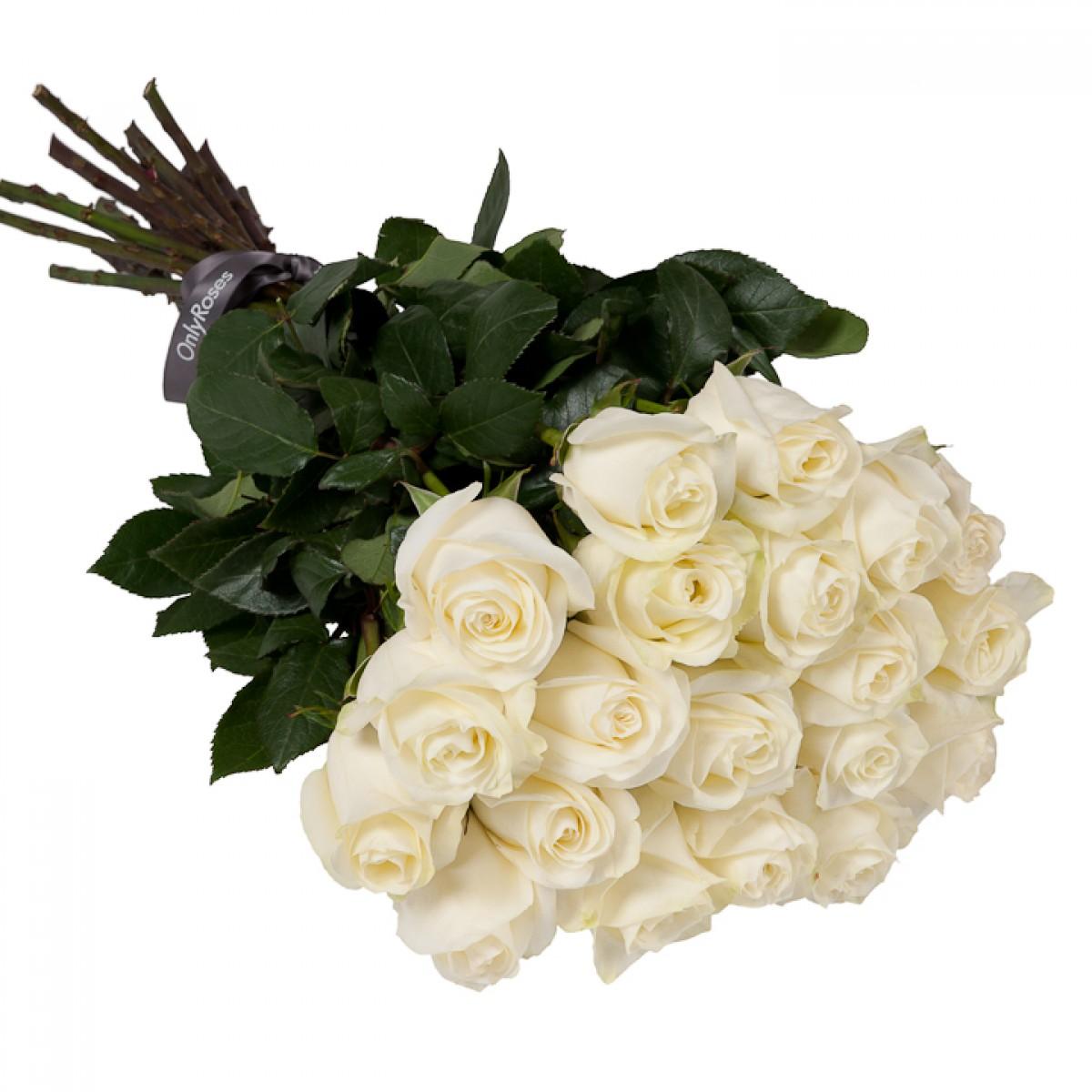 Букет от 15 до 25 бели рози (ти избираш броя)